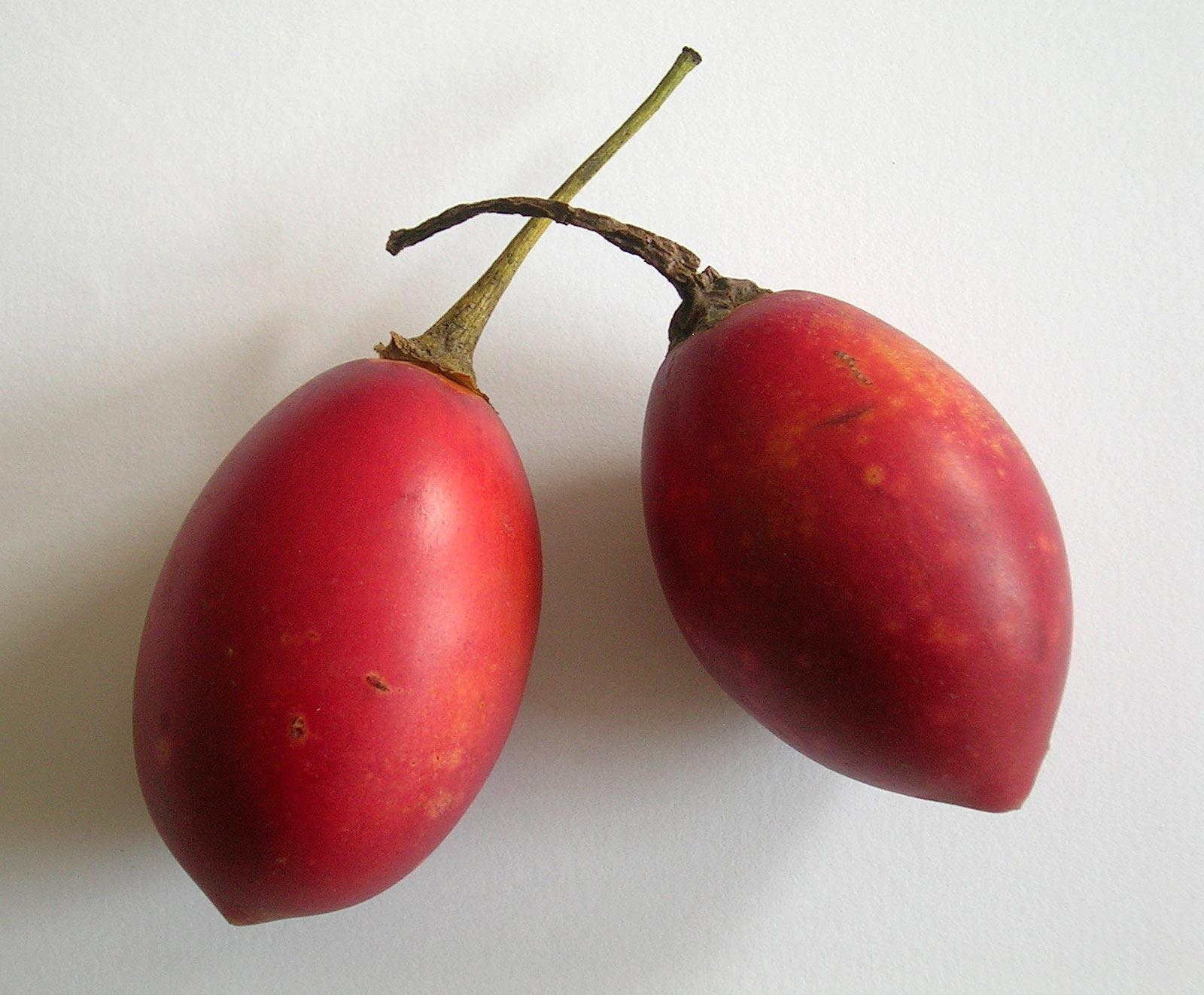 The Amazing Fruits and Veggies of Ecuador | MkMeier's Blog